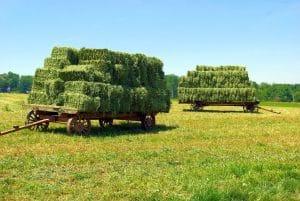 Amish Hay Wagons